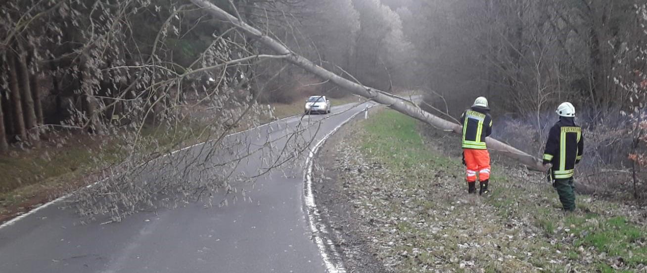 Windwurf K114 – Baum blockiert Straße
